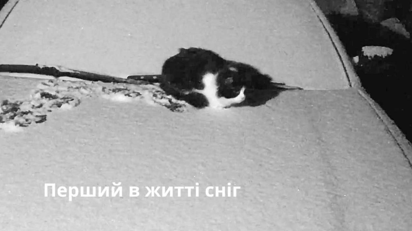 Перший в житті сніг